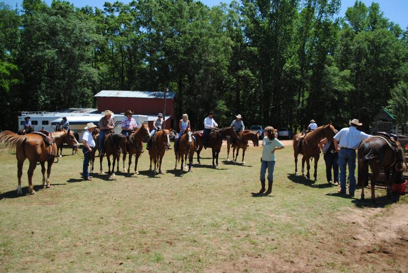 Jack Pot Ranch Sorting Competition